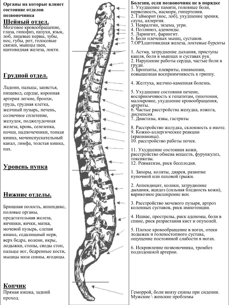 Связь позвоночника и внутренних органов